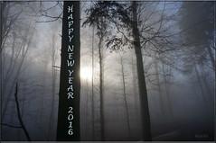 HAPPY NEW YEAR (ruschi_e) Tags: trees sun fog forest schweiz switzerland nebel sonne wald bäume 2016 neujahrswünsche ruschie happynewyear2016