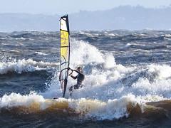 PC311655-Edit (Brian Wadie Photographer) Tags: gulls oystercatcher windsurfing kiting em1 goodlight 14xtc avonbeach canon70300lis hemgistburyhead