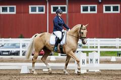 IMG_0725 (aaveennet) Tags: 2016 3taso 3tasokoulu heinkuu heinkuu2016 hevonen kes kilpailut koulu koulukisat kouluratsastus kuopio kuor ratsastus ratsastuskuva sorsasalo