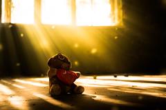 Teddy (--Conrad-N--) Tags: go2know hospital hohenlychen light beams abandoned window shadow baer