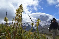 Pedicularis (Sotosoroto) Tags: dayhike hiking mtrainier burroughsmountain cascades mountains washington flowers lousewort