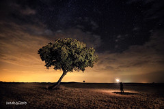 Atraccin (Luis Javier de la Fuente) Tags: nocturna night noche nikkor nikon nightshot nightphotography nightscape nubes nightpfotography longexposure largaexposicion landscape landscapes luisdelafuente amazing arbol tree clouds luz light candlelight yellow cielo sky spain stars shot estrellas espaa lanter holmoak encina viento old