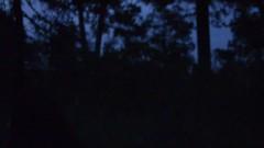 Tlaxcala Julio 2016 (Eugenio Gonzalez) Tags: luciernagas