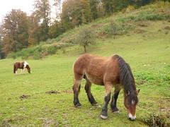 P1080099 (Claudie K) Tags: plombireslesbains prairie chevaux vge vosges boulis fort gents