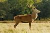 Red Deer Profile