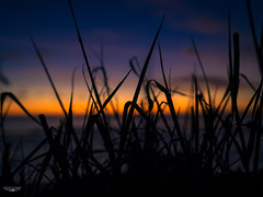 Obscured Sunset (Laith Stevens Photography) Tags: sunset tropical silhouette grass orange blue purple beach obscured serene relaxing south pacific nauru olympus omd em1 1240mmf28 pro olympusinspired laith stevens ngc outdoor greatphotographers