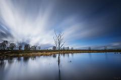 Brackvenn I (Tony N.) Tags: belgique belgium fagnes hautesfagnes brackvenn tree arbre water eau sky ciel fil poselongue longexposure d810 vanguard