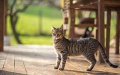 kittens (28) (Vlado Fereni) Tags: kitty kittens cats catsdogs animals animalplanet zagorje hrvatska hrvatskozagorje croatia nikond600 nikkor8518