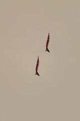 The Flying Bulls, Alpha Jets (krustyhimself) Tags: scalaria airchallenge airshow wolfgangsee salzkammergut austria 2014 alphajet fairchilddornier theflyingbulls