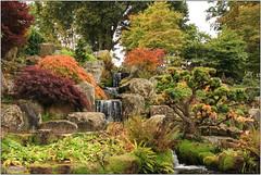 Japanese Garden (Mabacam) Tags: 2016 surrey rhs royalhorticulturalsociety wisley wisleygardens garden nature autumn leaves red orange yellow trees acers japanesegarden
