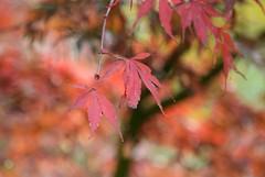 (careth@2012) Tags: fall autumn leaves scene scenery scenic view
