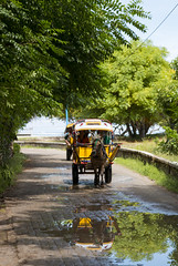 Andong : the main transportation of the Island (HansPermana) Tags: indonesia lombok gilitrawangan island holiday touristic relax trip travel traditional horse chariot reflection trees green sunny transportation puddle