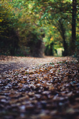 298/366 (romainjacques17) Tags: canon 6d 365project 365 project365 picoftheday larochelle france ef85mm 85mm bokeh feuilles leaves automne autumn fall wood forest fort