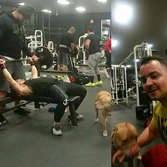 Kaia was protecting momma @danalinnbailey all night, but she finally warmed up to me. I was getting mid-set kisses at one point when she climbed up on the bench next to me and went to town on my arms. Absolutely adorable pup!  . . . #dlb #danalinnbai (swoletron) Tags: instagram bodybuilding powerlifting lifting fitness gym fit nutrition health beastmode doyouevenlift