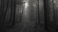 On lonely path (Netsrak) Tags: rheinbach nordrheinwestfalen deutschland de tree trees forest woods baum bume wald forst nature natur path way weg waldweg darkness dunkelheit outdoor light licht shadow schatten dark dunkel mist fog nebel dunst haze misty foggy neblig
