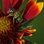 Glitter Bee thumbnail