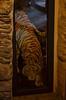 Valloria (112) (Pier Romano) Tags: valloria porte porta dipinta dipinte door doors painted imperia liguria italia italy nikon d5100 paese town dolcedo artisti pittori