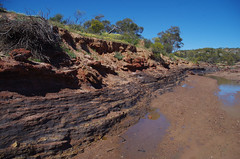 Carbonaceous mudstone, Miners Picnic Area, Irwin River, Coalseam Conservation Park, north of Mingenew, WA, 25/08/16 (Russell Cumming) Tags: rock carbonaceousmudstone mudstone minerspicnicarea irwinriver coalseamconservationpark mingenew westernaustralia