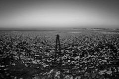 fullsizeoutput_9d4 (Emma Plume) Tags: ombre plage mer rocher mar basse