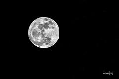 Super Moon 2 (Daniel Y. Go) Tags: d810 fx moon night nikon nikond810 philippines supermoon lunar