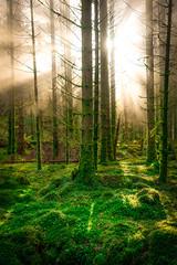 Morning in the forest. Krokeide, Norway (Paulius Bruzdeilynas) Tags: bergen krokeide norway norge norwegian forest moss mossy sunrise sunbeams sunrays fog smoke trees fairytale sony sonyalpha sonya7ii