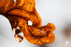 Fragments of autumn . 3 (andrea.prave) Tags: foglia details autumn fragment frammeto leaf closeup dettaglio macro naturaleza colors autunno natura nature colore