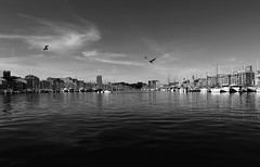 Vers l'entre du port (zuhmha) Tags: totalphoto