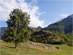 Montandré