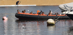 All aboard?  17.9.15. (VolVal) Tags: river boat ducks canoe september dorset buoys bournemouth mallards tuckton buoyant