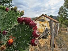 Tunas de Floresta Boy. Colombia (@omarsilva_photos) Tags: cactus sky naturaleza nature rural arquitectura américa arboles ngc cielo campo colina casas nationalgeographic airelibre tunas suramérica armonia omarsilvaphotos florestaboycolombia