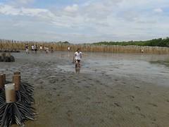 10.12.2015-AngloSingapore-BangPu-100 trees (11) (pattfoundation2014) Tags: thailand education mangrove treeplanting bangpu pattfoundation anglosingapore