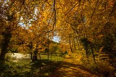 Arlesheim135 (Basel101) Tags: orange laub herbst basel gelb wald garten ermitage stimmung wege arlesheim erholung baselland dornach wandeln