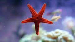 Deniz Yldzlar (thehayvan) Tags: deniz hayvan yldz diken n denizyldz canl savunma
