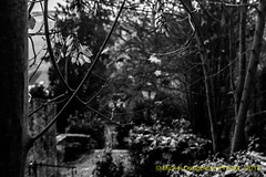 03112015_Vierves-sur-Viroin_03