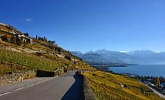 Vignoble en automne (Diegojack) Tags: automne vignes vignoble paysages lavaux léman lac corniche saintsaphorin vevey neige rochersdenaye dentdejaman routes
