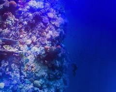 ... bin mal abgetaucht (Helmut44) Tags: panorama nature water germany deutschland leipzig fisch sachsen australien blau greatbarrierreef kunstwerk workofart korallenriff unterwasserwelt asisi panometer rundbild