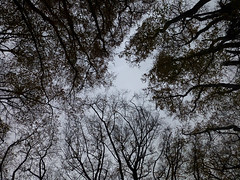 Something wicked this way comes (ArtGordon1) Tags: uk november trees england silhouette woodland eppingforest silhouettes essex 2015 davegordon davidgordon artgordon1 daveartgordon daveagordon davidagordon