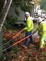 November wind storm hits Puget Sound region (Puget Sound Energy) Tags: trees storm lines wind electricity wa poweroutage poles pse sammamish outage downed pugetsoundenergy downtree