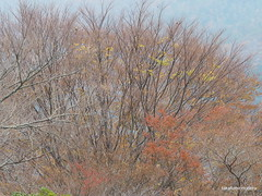 PB220932 (takafumionodera) Tags: japan olympus hakone omd em1   goura
