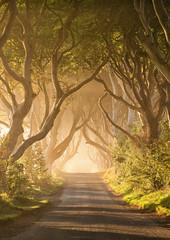 Magic on the Kingsroad (Kristin Repsher) Tags: trees ireland mist sunrise landscape nikon df fantasy northernireland magical ballymoney countyantrim antrim kingsroad beeches armoy gameofthrones darkhedges