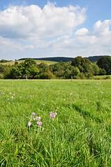 Landscape (Beata*) Tags: nature landscape hungary sky blue green