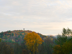 This morning (grongar) Tags: crow hills autumn trees vermont morning