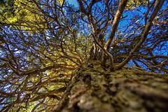 Ein einfacher Zweig ist dem Vogel lieber, als ein goldener Kfig. (thphotographyaustria) Tags: nature travel explore tree baum natur reisen rauris nationalpark hohetauern color