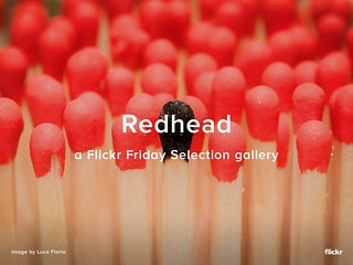Flickr Friday - Redhead Selection Gallery