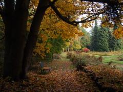 Autumn in Hortus Haren, Groningen. The Laarman Garden. (Michiel Thomas) Tags: hortus haren groningen herbst herfst automne autunno  otoo laarmantuin laarman hortulanus