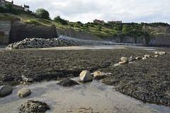 Robin Hood's Bay (421) (rs1979) Tags: robinhoodsbay northyorkshire yorkshire beach rockyforeshore seawall