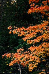 2016-10-14_8660.jpg (flyfast 70) Tags: cascades eau nature water feuillage automne fall rivire photographie trees foto fort river forest photography chte colors couleurs arbres madeleinepunde stcme lake stcme chte fort rivire madeleinepunde
