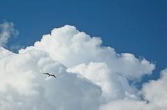 Planeando  (E) (Esperanza & Joseba) Tags: nubes gaviotas nwn