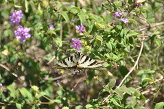 DSC_9160 (nosallo) Tags: macro mariposa nikon d5000 sigma18250 sigma 18250