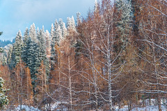 First snow in october (sem9077) Tags: snow autumn beautiful colorful colors photos photography forest mountains nikon nikond750 fx nature